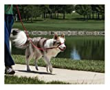 Premier Wonder Walker Dog Harness, Small/Medium, Deep Purple