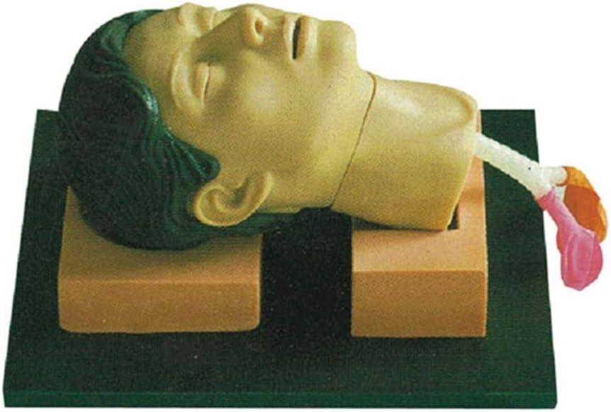 Skeleton Modelo De Entrenamiento De Incisión Y Punción Cricotiroidea Intubación Traqueal Modelo De Manejo De Vías Respiratorias Laboratorio Traqueal Capacitación De Vías Respiratorias Laboratorio