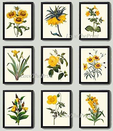 - Botanical Print Set of 9 Antique Beautiful Redoute Flowers Yellow Blanket Flower Crown Imperial Monkeyflower Iris Rose Coreopsis Lady's Slipper Poppy Daisy Home Room Decor Wall Art Unframed