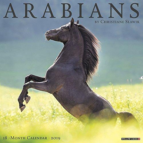 Arabians 2019 Wall Calendar