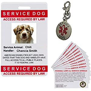 Service Dog Photo I.D. Bundle 1 HD Picture, 1 Tag 10 ADA Cards Training, Therapy, Veterans, PTSD, Anxiety Canines