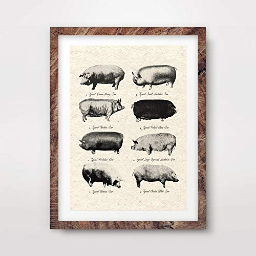 PIG BREEDS CHART FARMING FARM AGRICULTURAL AGRICULTURE ART PRINT Vintage Rustic Farmhouse Cottage Traditional Home Decor Wall Picture A4 A3 A2 (10 Sizes)
