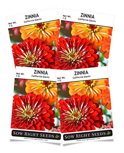 Sow Right Seeds California Giant Zinnia Seeds - Full Instructions for Planting, Beautiful to Plant in Your Flower Garden; Non-GMO Heirloom Seeds; Wonderful Gardening Gifts (4)