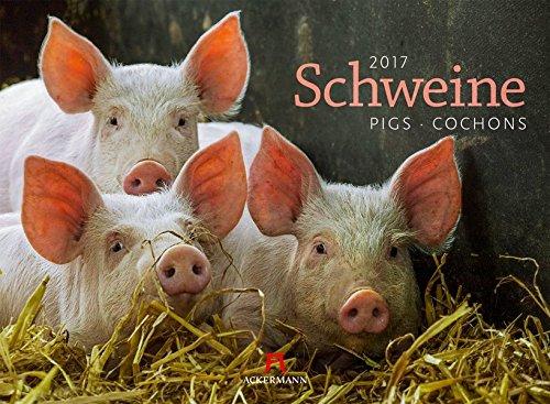Schweine 2017