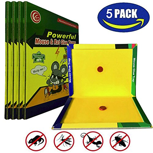 Best Mouse Bait - MTNZXZ Mice/Rat Glue Trap, 5 Packs Peanut Butter Scented Rat Glue Boards, Indoor Outdoor High Strength Mouse Traps, Let Family and Friends Pets have a Warm Home away From Mice and Harmful Animals