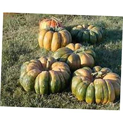 HNM 15 Seeds Rare Multi-Colored Cinderella Pumpkin Seeds - LY810 : Garden & Outdoor