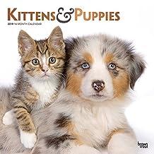 Kittens & Puppies 2019 Square Wall Calendar