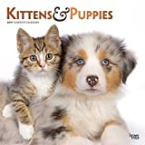 Kittens & Puppies 2019 12 x 12 Inch Monthly Square Wall Calendar with Foil Stamped Cover, Animals Cute Kittens (Multilingual Edition)