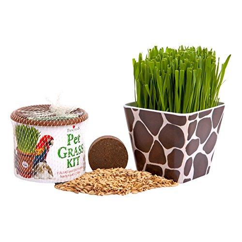 Priscillas Kitty Giraffe Planter Container