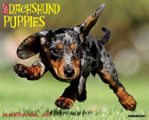Just Dachshund Puppies 2015 Wall Calendar