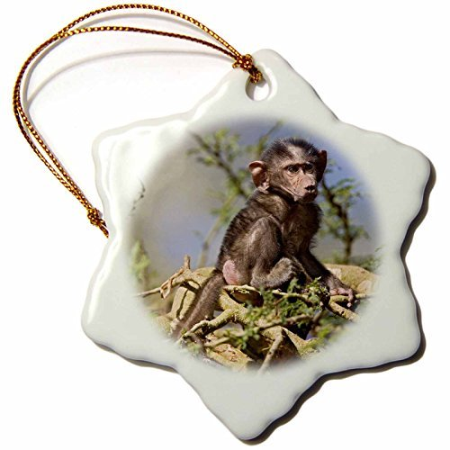 Christmas Ornament Danita Delimont - Baboons - Baby Olive Baboon, Lake Nakuru National Park, Kenya-AF AJE - Adam Jones - Snowflake Porcelain Ornament -