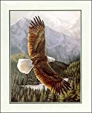 Soaring Eagle Paper Tole 3D Decoupage Craft Kit 8x10 18412