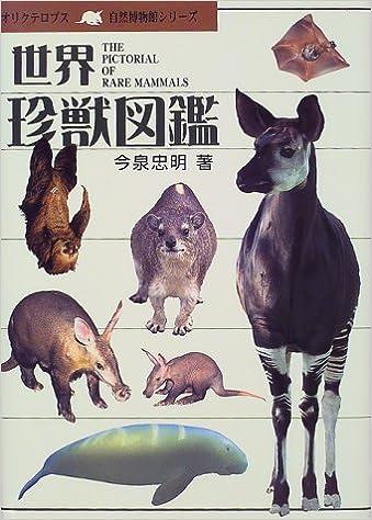 世界 四 大 珍獣