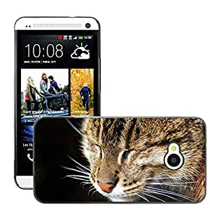 Hot Style Cell Phone PC Hard Case Cover // M00047082 sleepy pets animals cat // HTC ONE M7