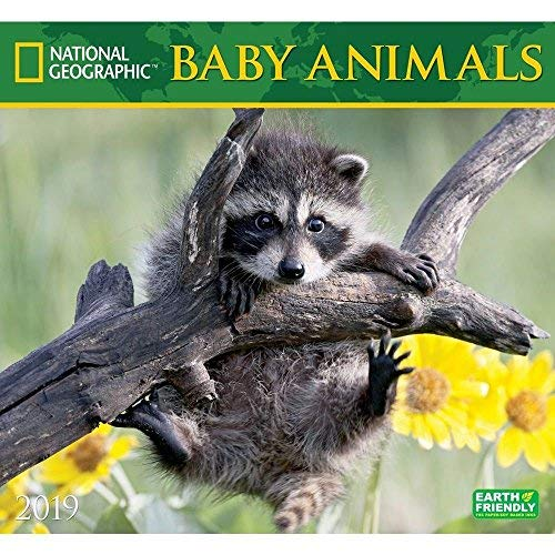 Baby Animals National Geographic 2019 Wall Calendar