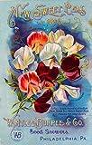 1893 - Philadelphia, Pennsylvania Burpee New Sweet Peas Vintage Flowers Seed Packet Travel Advertisement Poster. Poster measures 10 x 13.5 inches