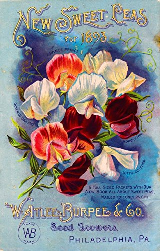 (A SLICE IN TIME 1893 - Philadelphia, Pennsylvania Burpee New Sweet Peas Vintage Flowers Seed Packet Travel Advertisement Poster. Poster measures 10 x 13.5 inches)