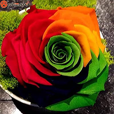 Rainbow Rose seeds DIY Home Garden Colorful Rose Flower Plant 1 Pack 50 seeds