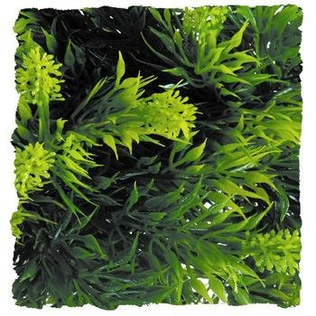 Plant Malaysian Fern for Reptile [Set of 2] Size: Small (0.71' H x 0.21' W x 0.46' L) by Zoo Med
