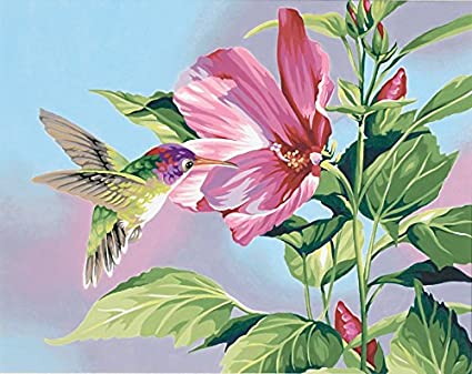 Amazoncom Dimensions Hibiscus Hummingbird Paint By Number For