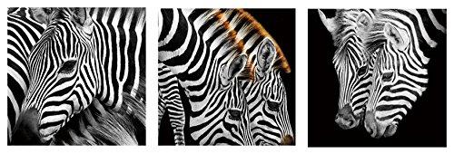 Zebra Stripes Tempered Glass Wall Art, Zebra wall art