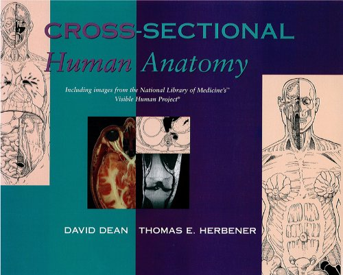 Cross-Sectional Human Anatomy
