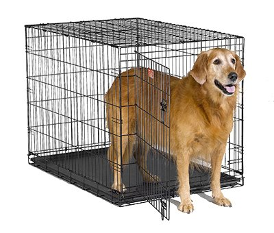 Midwest Metal Products PE-842 PE 42'' SGL DR Dog Crate - Quantity 1 by Midwest Products Co.
