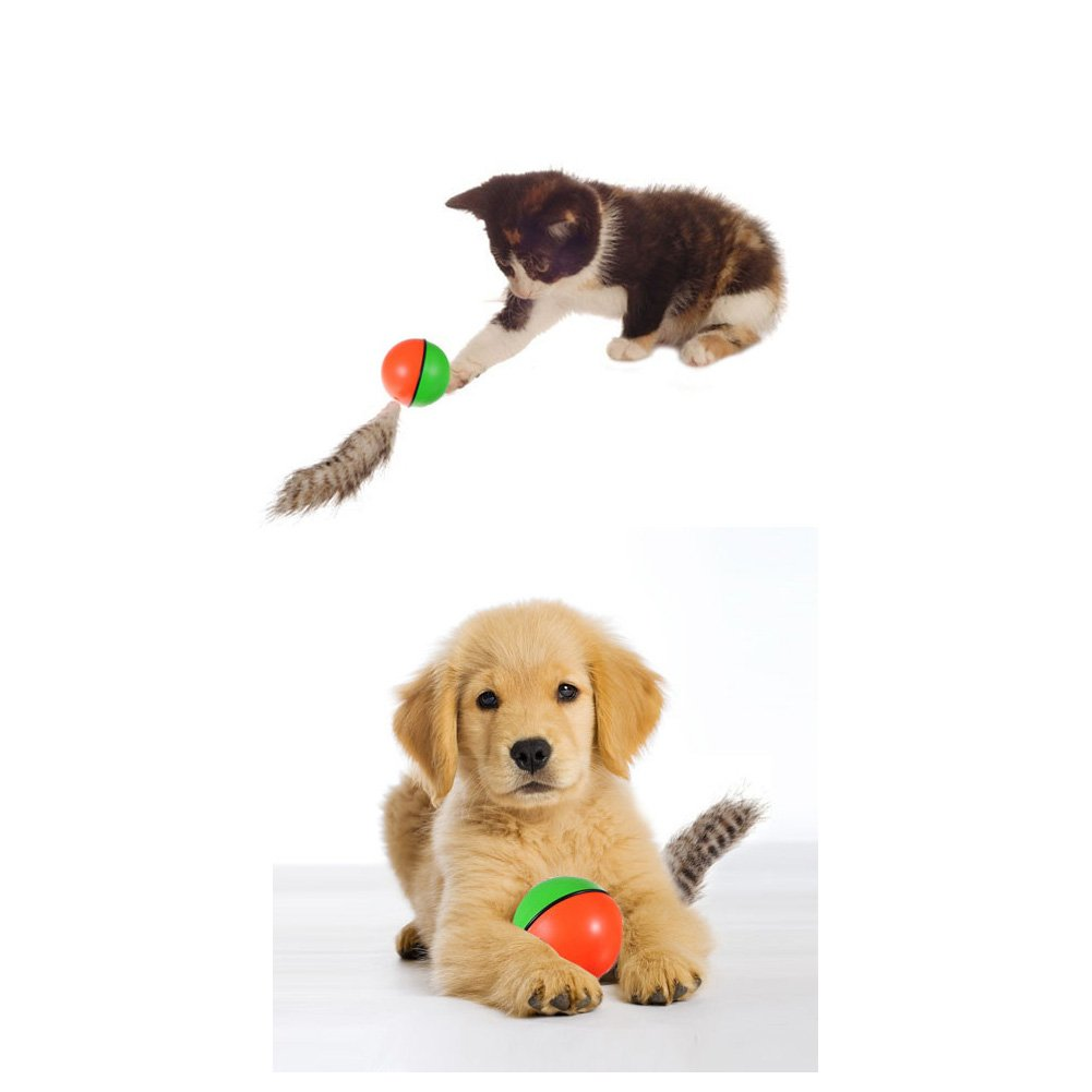 Pet Supplies : Pet Cat Dog Toy Rolling Jumping Crazy Weasel Chaser ... | Dog Toys That Move