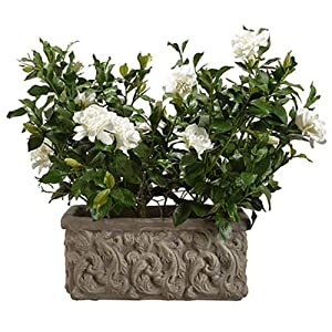 "26"" Large Silk Gardenia Flower Arrangement w/Stone Pot -Cream/Green 61"