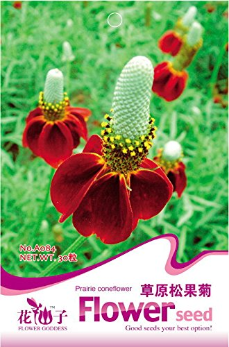 1 Original Pack, 30 Seeds/Pack, Ratibida Coneflower Mexican Hat Columnifera Midget Seed ()
