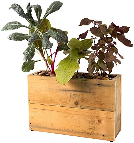 Modern Sprout 3-Pot Hydroponic Planter, Reclaimed Wood