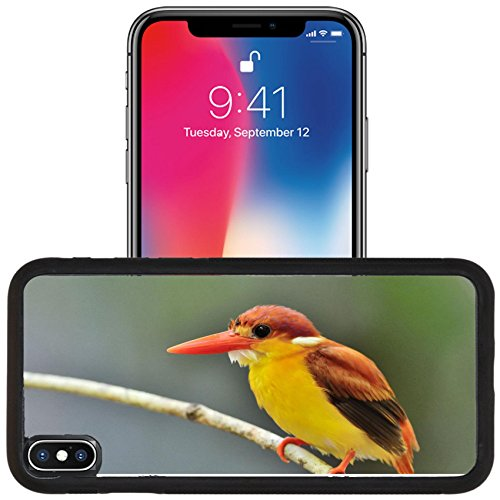 Luxlady Apple iPhone x iPhone 10 Aluminum Backplate Bumper Snap Case IMAGE ID 31333271 Bird Rufous backed Kingfisher Thailand