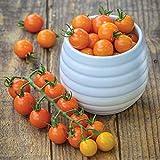 Burpee Honeycomb Hybrid | Golden Orange Cherry Tomato, Rich Flavor | 15 Seeds