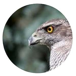 alfombrilla de ratón pájaro del halcón 2015 - ronda - 20cm