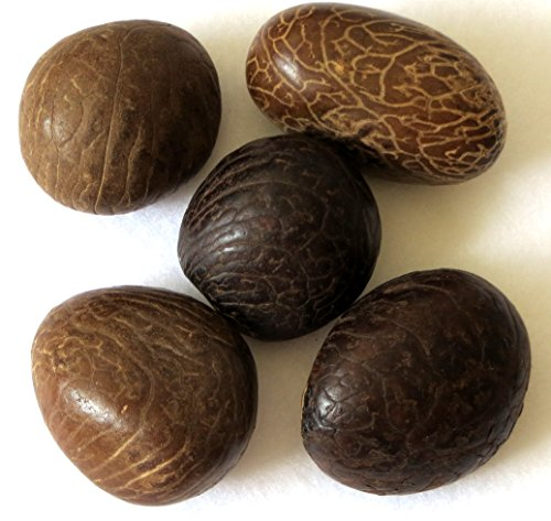 Large Polished Tagua Nuts, 40-50 mm, set of five ()
