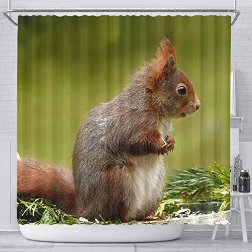 Attitude Squirrel - Paws With Attitude Cute Red Squirrel Print Shower Curtains