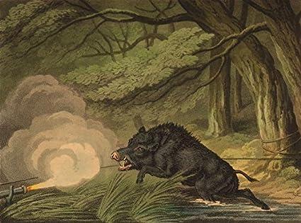 amazon com germany wild boar trap rope trigger matchlock field