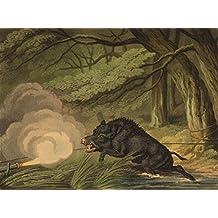 GERMANY. Wild Boar Trap. Rope trigger matchlock(Field Sports-Edward Orme) - 1814 - old print - antique print - vintage print - Pigs art prints