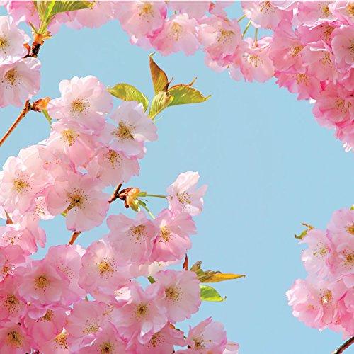 (American Crafts 341443 Cherry Blossom Paper, Multi )