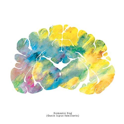J. Sayuri Domestic Dog Brain Art - 12'' x 12'' Animal Brains Print - Neurology, Neuroscience, Psychology, Veterinary Artwork Colorful Medical Wall Art Prints and Gifts by J. Sayuri