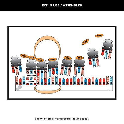 Hablar Easies síntesis de proteínas de escritorio: Amazon.es ...