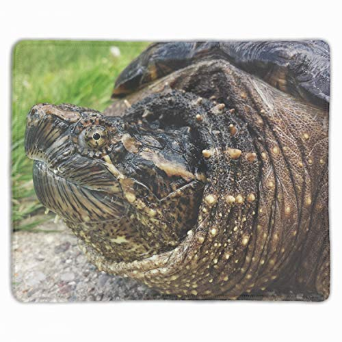 (Common Snapping Turtle Reptile Mouse Pad Office Space Decor Home Office Computer Accessories Mousepads Watercolor Vintage Design)