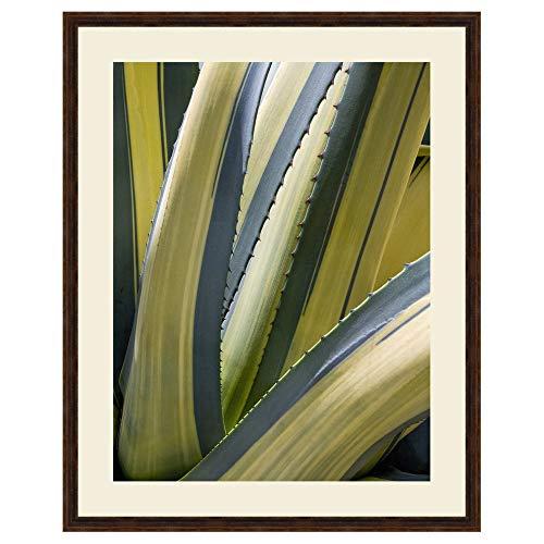 - Black Forest Decor Variegated Agave II Framed Print