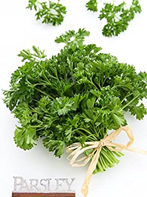 Parsley, Triple Curled 1 LB ~134,400 seeds