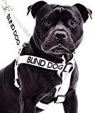 Blind Dog White Color Coded Alert Warning L XL Non-pull Dog Harness Prevents Accidents By Warning Others of Your Dog in Advance