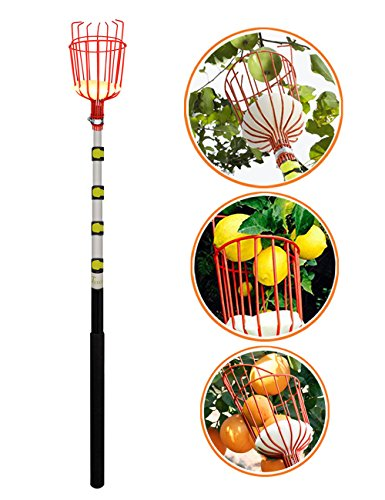 EnergeticSky 13-Foot Fruit Picker with Light-Weight Aluminum Telescoping Pole and Bruise Free Basket for Apple,Pear,Peach,Orange and More Peach Harvesting,Handy 5 Section Extension Pole by EnergeticSky