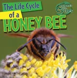 The Life Cycle of a Honeybee, Barbara M. Linde, 1433946750