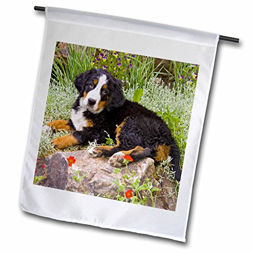 3dRose fl_88859_1 Colorado Breckenridge Bernese Mountain Dog US06 Bja0157 Jaynes Gallery Garden Flag, 12 by 18-Inch - Bernese Mountain Dog Garden Flag