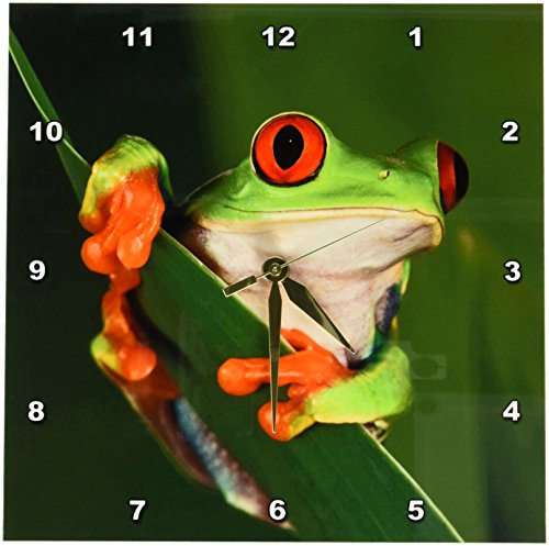 Cheap 3dRose dpp_83654_1 Redeyed Tree Frog 'Agalychnis Callidryas' NA02 AJE0384 Adam Jones Wall Clock, 10 by 10-Inch