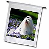 3dRose Danita Delimont – Zandria Muench Beraldo – Dogs – USA, California. Maltese posing in purple. – 18 x 27 inch Garden Flag (fl_192346_2) Review